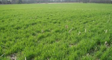I benefici delle cover crops per il suolo e le colture