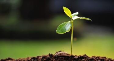 Analisi fertilità terreno: quali effettuare e perché