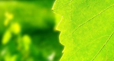 Irroratrici e ugelli: le scelte ecosostenibili