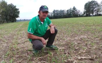 Minima lavorazione e cover crops, l'accoppiata vincente