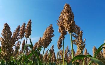 Greening: il periodo per determinare due o tre colture
