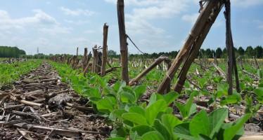 Addio alla soia nelle aree di interesse ecologico?