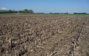 Il sodo migliora il terreno: i numeri