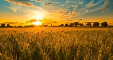 Come aumentare la produttività della terra e del lavoro