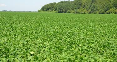 Disco verde per la soia nelle aree di interesse ecologico