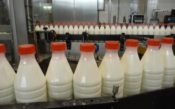 Il sapore del latte nasce in stalla: come lasciarlo intatto