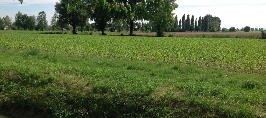 Attenzione al calcolo delle superfici per il greening