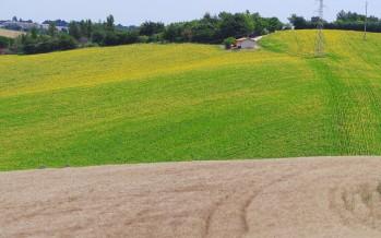 Agricoltura, tre casi per i quali non si ha la nuova Pac