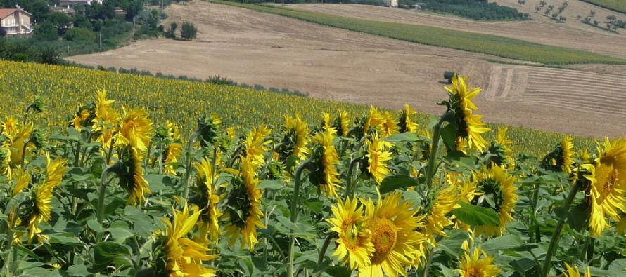 Agricoltura, la novità 2015: il piano di coltivazione necessario per accedere alla Pac