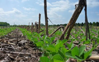 PSR Veneto 2015-2020: al via il primo bando sulle tecniche agronomiche a basso impatto