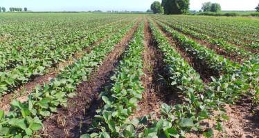 La Torre: Kultistrip su mais e soia e il biogas intelligente e redditizio