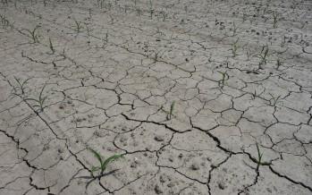 Quando irrigare? Ce lo dicono le sonde e le centraline a energia solare