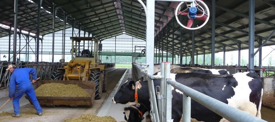 Ventilatori e acqua nebulizzata assicurano il benessere in stalla