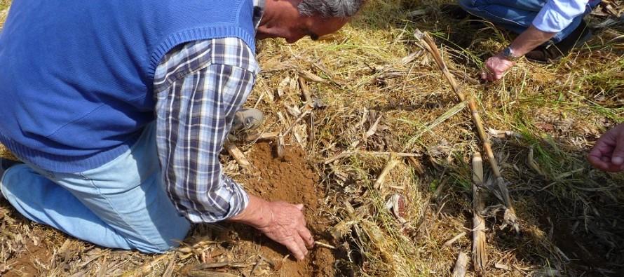 Il sodo sui terreni argillosi? Si può: parola di chi lo fa
