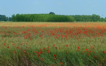 Ismea finanzia l'acquisto di terreni agricoli: a chi, come e a quali condizioni
