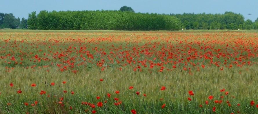 Ismea finanzia l acquisto di terreni agricoli a chi come for Ottenere un mutuo per comprare terreni