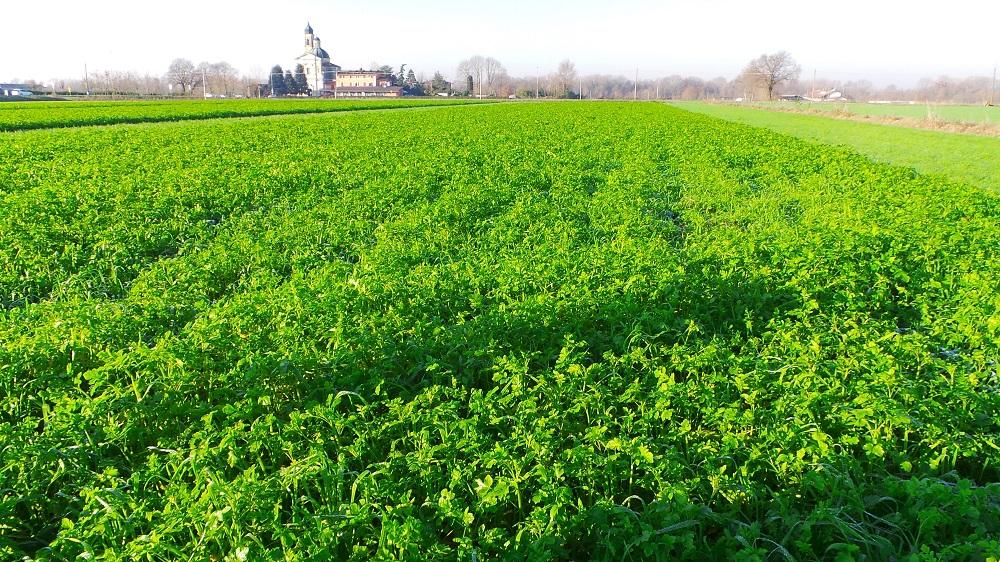 Una coltura di copertura o cover crop, costituita da un miscuglio di diverse specie.