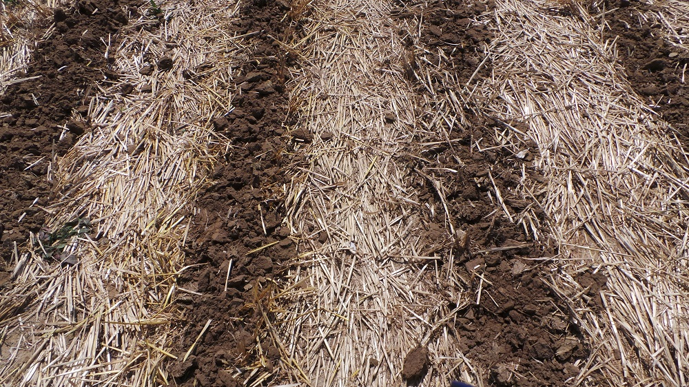 La lavorazione del terreno a strisce è la sola minima lavorazione consentita dalla sottomisura 10.1.04.