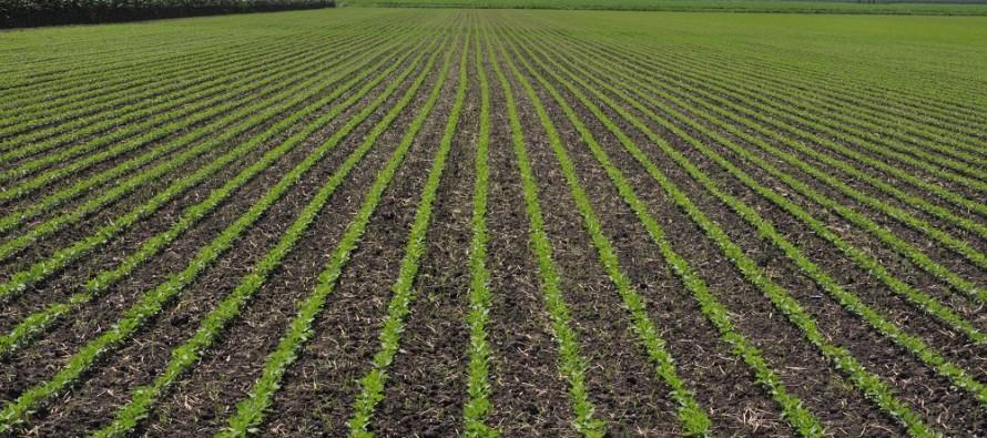 Nuovo PSR Veneto, con l'ottimizzazione ambientale altri soldi per gli agricoltori virtuosi