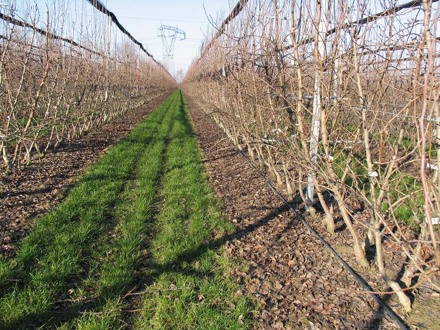 L'inerbimento delle colture arboree specializzate favorisce la maggiore portanza del suolo, il contenimento delle emissioni di gas clima alteranti e la riduzione dell'erosione.