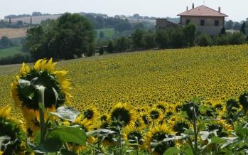 PSR Toscana: da 220 a 830 euro a ettaro per i comportamenti virtuosi in campo