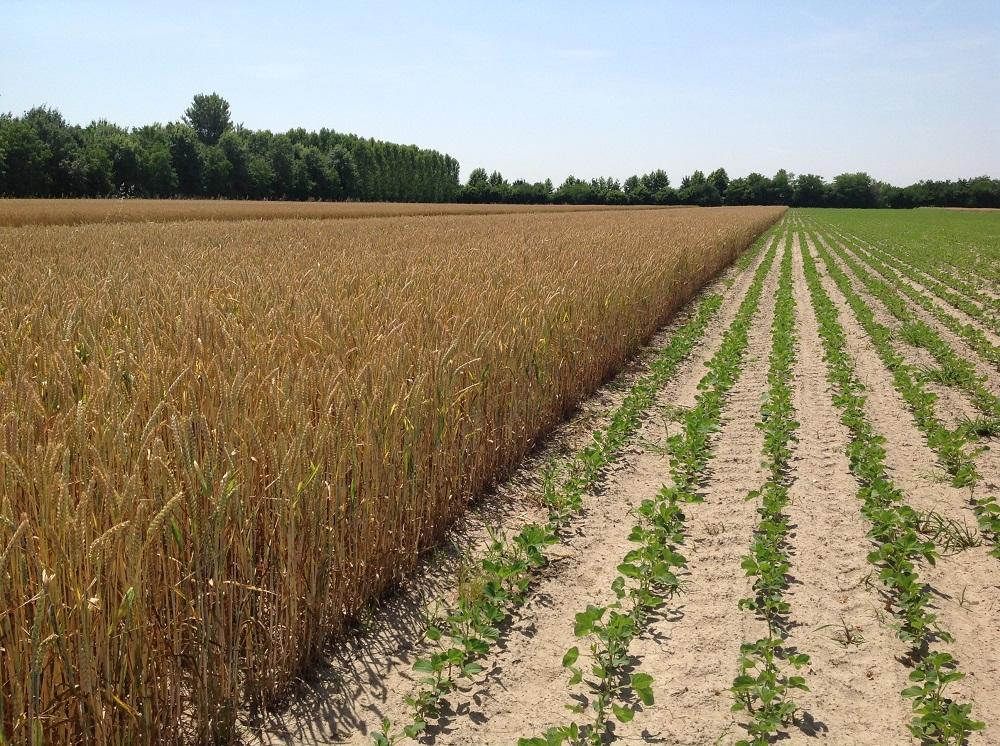 La misura di finanziamento prevede che si adottino opportune successioni tra colture diverse.