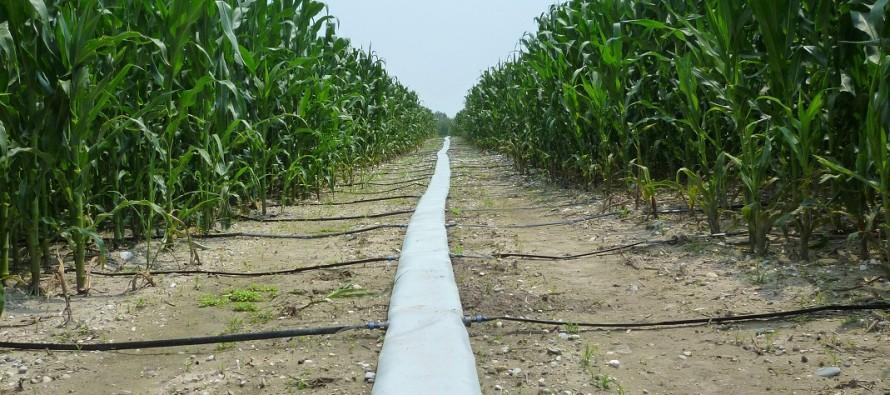 i sistemi a goccia su mais e soia un irrigazione a regola