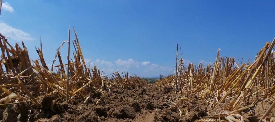 Approvato il PSR Emilia-Romagna. Ecco la misura M10 dedicata alla sostenibilità