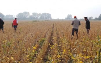 La misura M16 dei nuovi PSR finanzia i gruppi di agricoltori innovatori