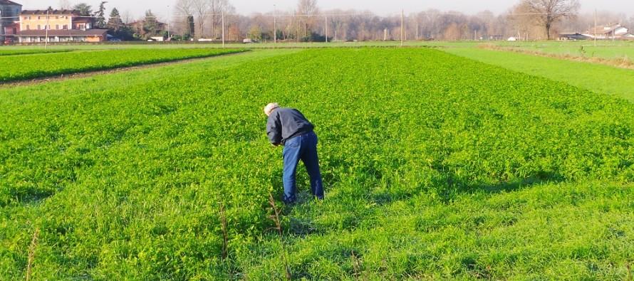 Agricoltore part-time, ma senza partita Iva: può essere considerato agricoltore attivo?