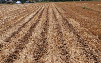 PSR Puglia, nelle misure agroambientali sono ammessi solo il sodo e lo strip-till