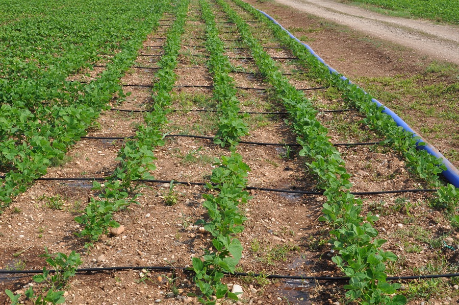 Le ali gocciolanti si abbinano bene ai sistemi di minima lavorazione, e anche queste attrezzature godono di sostegni da parte dei PSR se l'agricoltore desidera acquistarle.