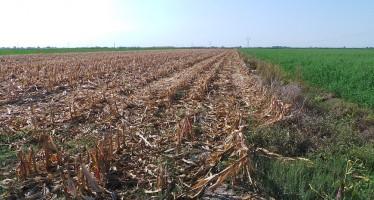Menghini: con la subirrigazione, produzioni record di medica e mais