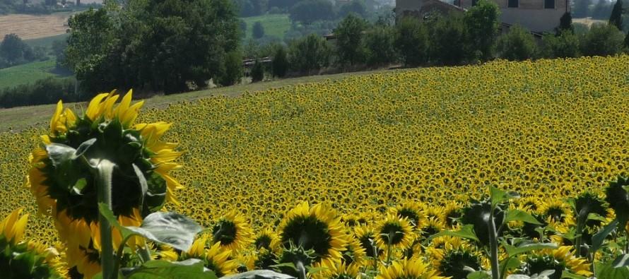 Toscana, uscito il bando PIF che finanzia i progetti integrati di filiera