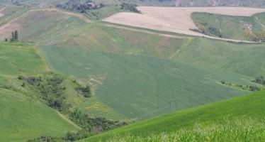 Niente Pac per gli agricoltori con pascoli magri dati a terzi