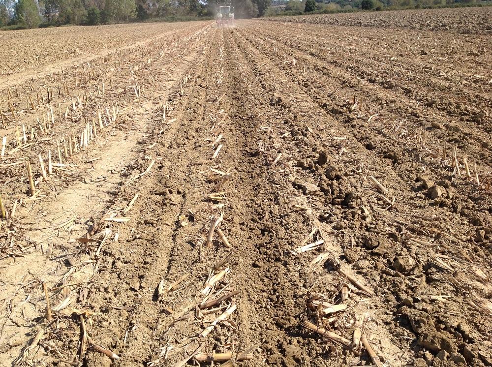 Ecco il lavoro eseguito dal Kultistrip su un terreno molto compatto con elevate percentuali di argilla.