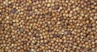 Coriandolo da seme, una buona opportunità per una coltura a contratto richiesta dal mercato
