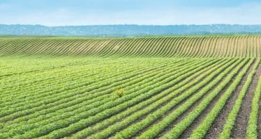 Esonerati dalla domanda Pac fino al 2020 gli agricoltori con aiuti fino a 1250 euro