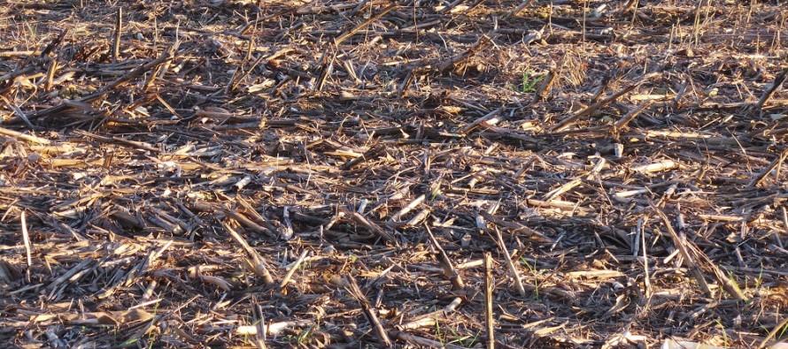 Per avere successo con la minima lavorazione occorre la corretta gestione dei residui colturali