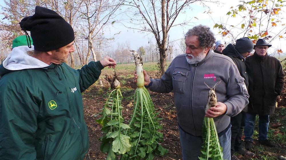 A sinistra Massimo Motti con il rafano europeo, molto diverso e più piccolo rispetto al Tillage radish americano a destra.