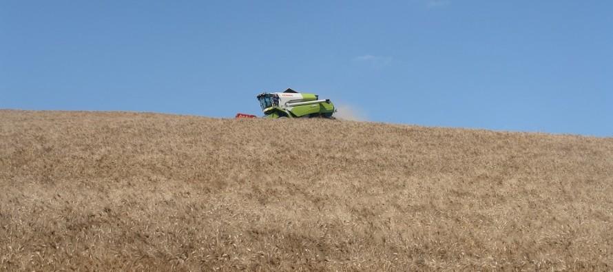 Le dieci regole d'oro per produrre grano duro di qualità a costi sostenibili