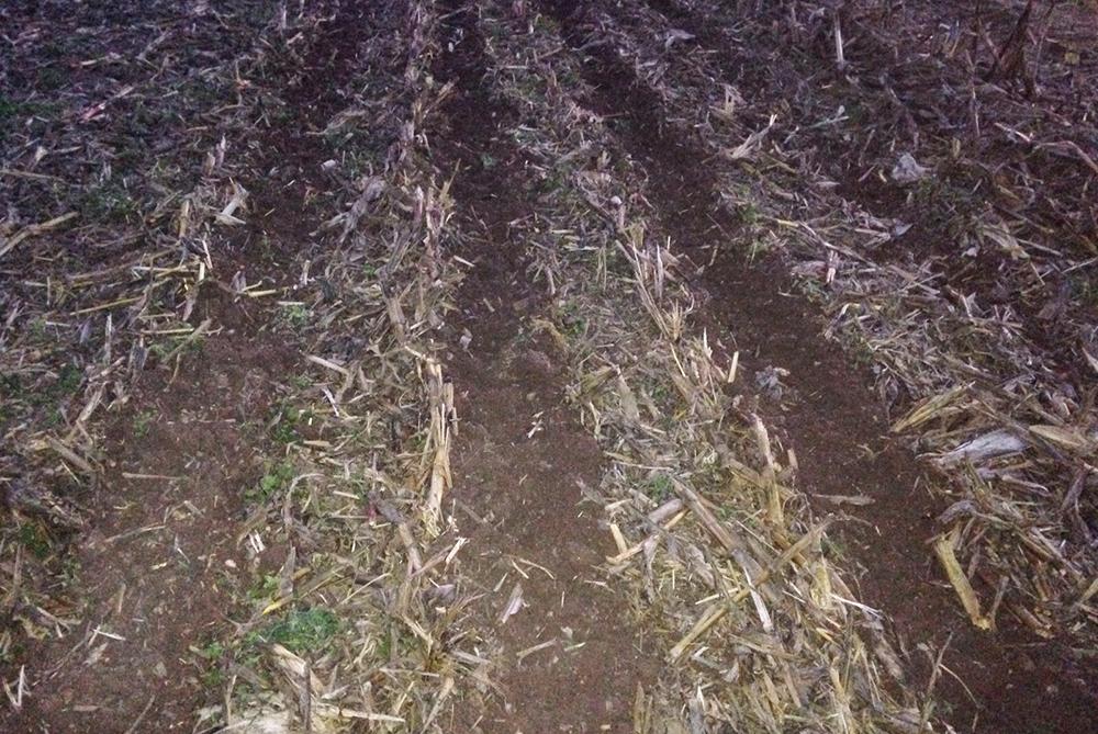 Ecco come si presenta la striscia di terreno lavorata dopo un passaggio con il Kverneland Kultistrip. È il letto di semina per il mais 2016.