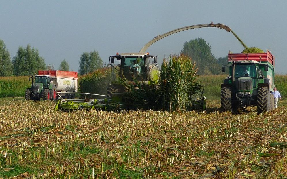 Per alimentare un impianto di biogas la trinciatura deve essere fine ed effettuata al momento giusto, dotando la macchina di un rompigranella ben regolato.