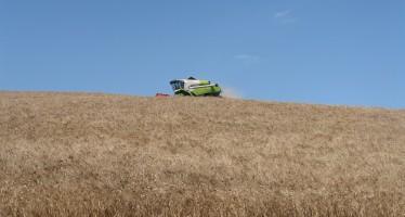 Grano Armando: l'agricoltore guadagna e l'industria ha il prodotto che desidera