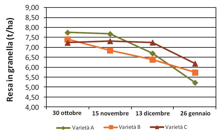 Resa di tre varietà seminate in epoche differenti. Alcune varietà si adattano meglio al ritardo della semina. Elaborazione dati Horta.