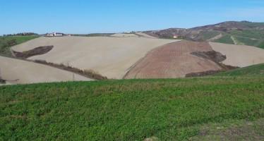Il nuovo Programma di Sviluppo Rurale Nazionale finanzia rischi, irrigazione e biodiversità animale