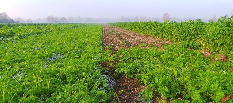 Se il suolo è vivo e ha sostanza organica, i nutrienti minerali sono più disponibili