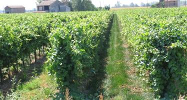 Il caso del dipendente dell'industria che vuole fare il piccolo agricoltore