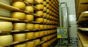 Parmigiano Reggiano: introdotti nuovi vincoli al disciplinare di produzione
