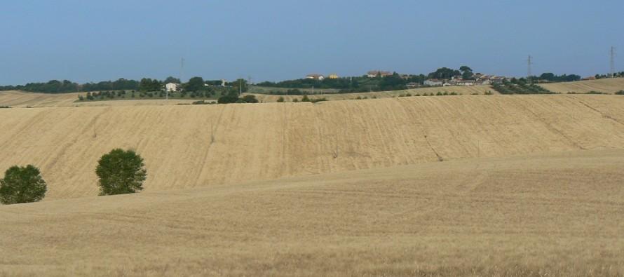 PSR, Basilicata regione più virtuosa del Sud Italia nel sostenere l'agricoltura conservativa